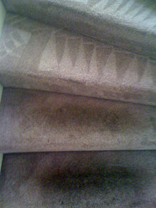 Facts You Need to Know About Carpet Protection
